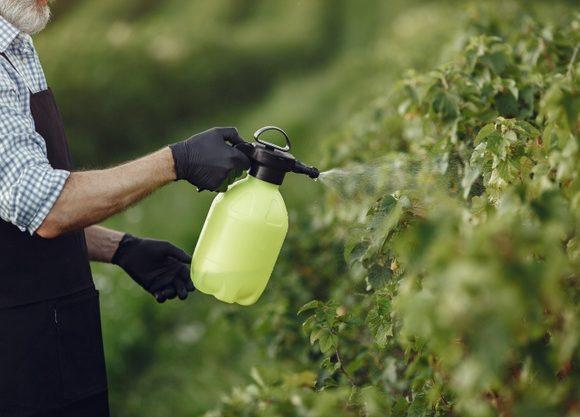 Cómo prevenir plagas en tu jardín