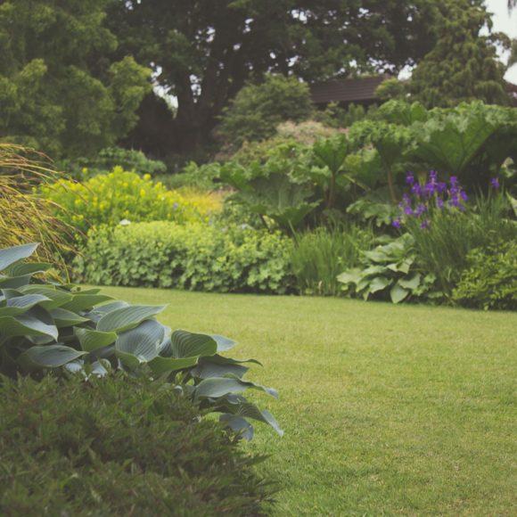 Mitos de la jardinería