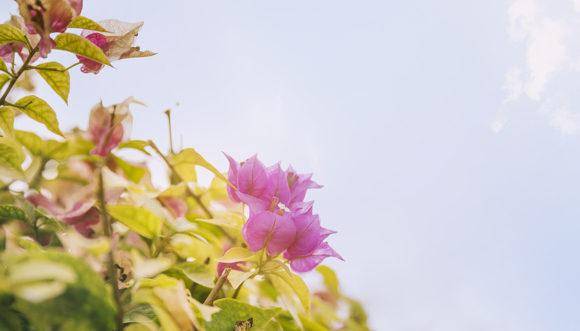 Plantas ideales para tu patio o jardín (I)