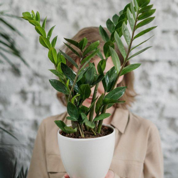 ¿Las plantas nos escuchan?