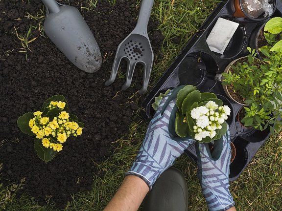 Trucos para el mantenimiento de tus plantas (II)