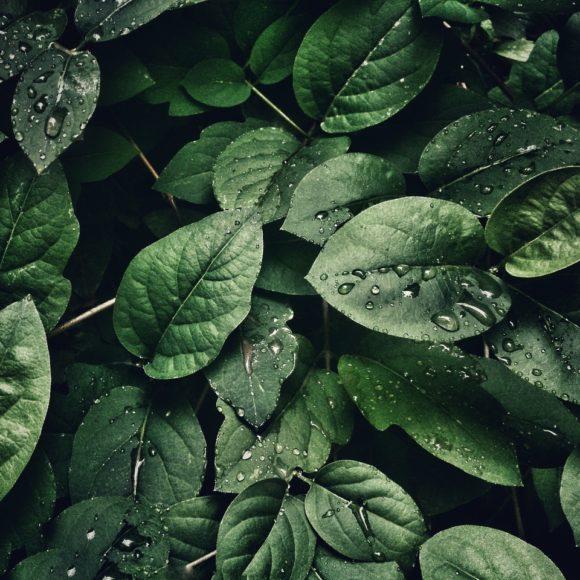 Beneficios de tener plantas en casa (II)