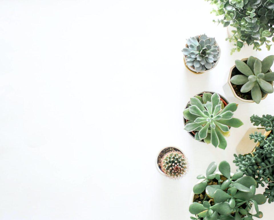 ¿Las plantas necesitan más agua en verano?