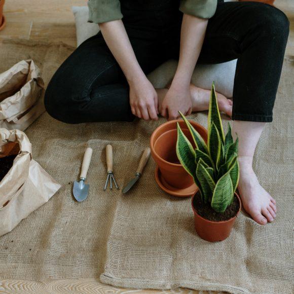 Ayuda a tus plantas contra el calor (I)