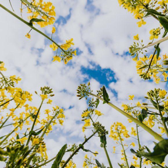 Últimas tendencias en Jardinería y Paisajismo