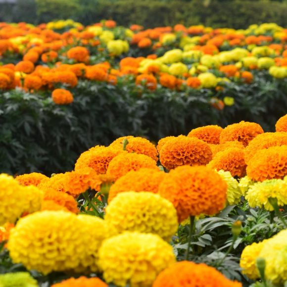 Plantas que florecen en verano