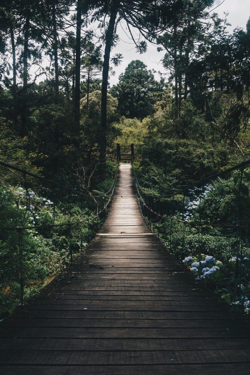 Datos sobre la silvicultura (I)