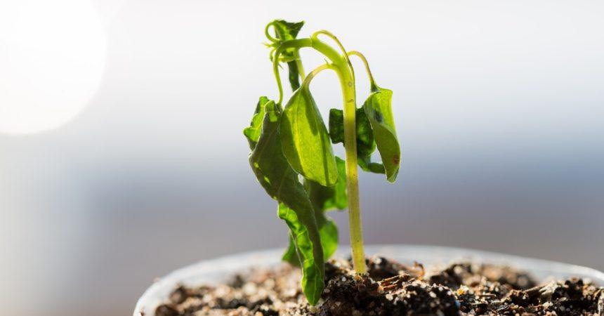 ¡Mi planta está seca!
