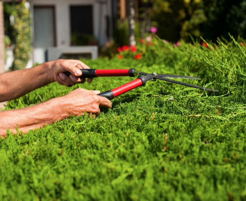 Trabajos de jardinería imprescindibles en otoño (II)