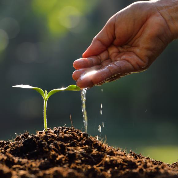Trabajos de jardinería imprescindibles en otoño (I)